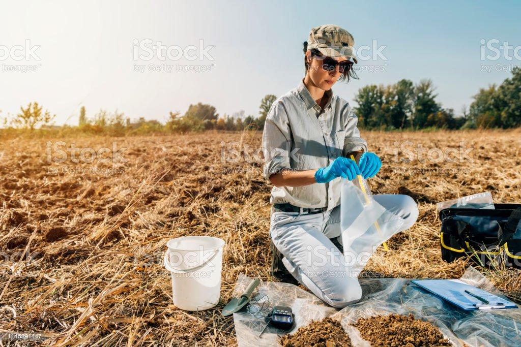 Soil Testing Agronomy Inspector Taking Soil Sample Stock Photo - Download  Image Now - iStock