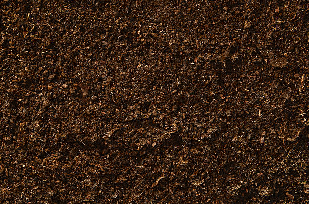 Soil texture background seen from above, top view. – Foto