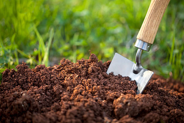 soil with a garden trowel - 鏟 個照片及圖片檔