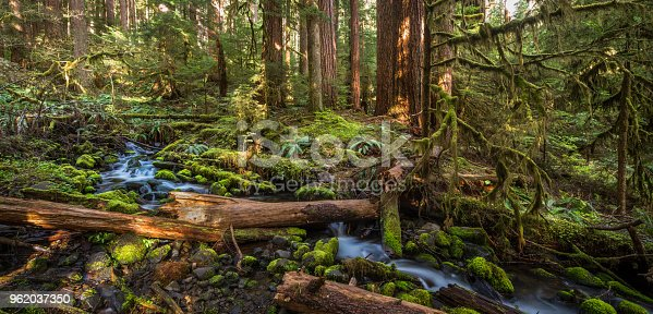 Washington State, Olympic Peninsula, Temperate Rainforest, Olympic National Park, Sol Duc Valle