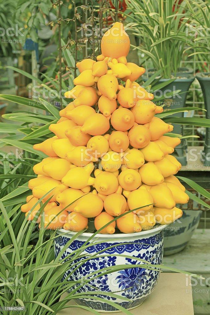 solanaceae fruit herbs stock photo