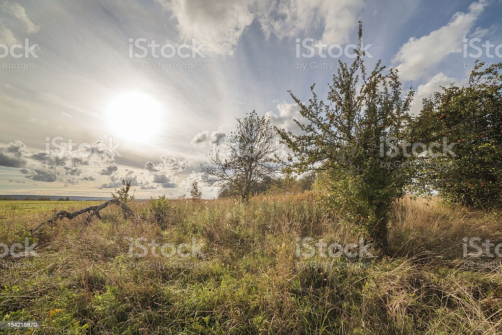 solar evening in an old garden royalty-free stock photo