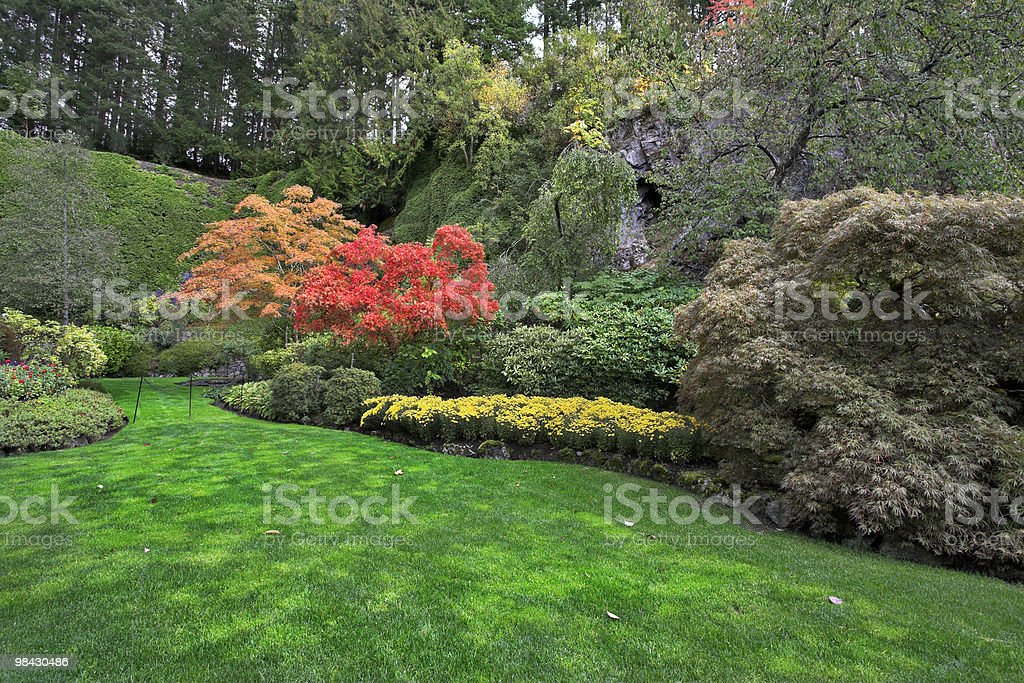 Solar glade. royalty-free stock photo