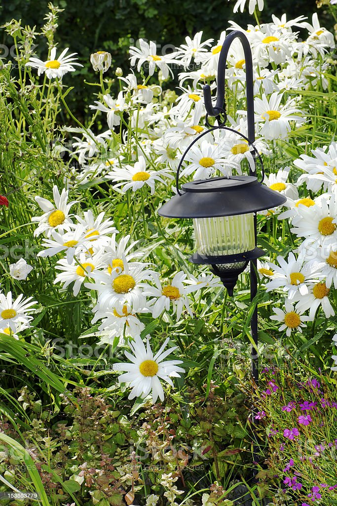 Solar lantern and daisies royalty-free stock photo