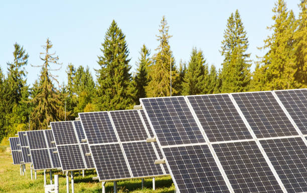 Solar panel collectors in forest, coniferous trees background, clear sky above, closeup detail stock photo