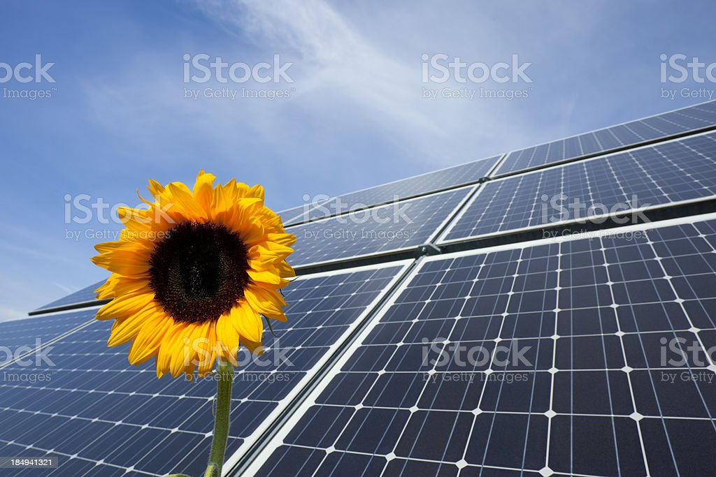 Solar Panel with a sunflower royalty-free stock photo