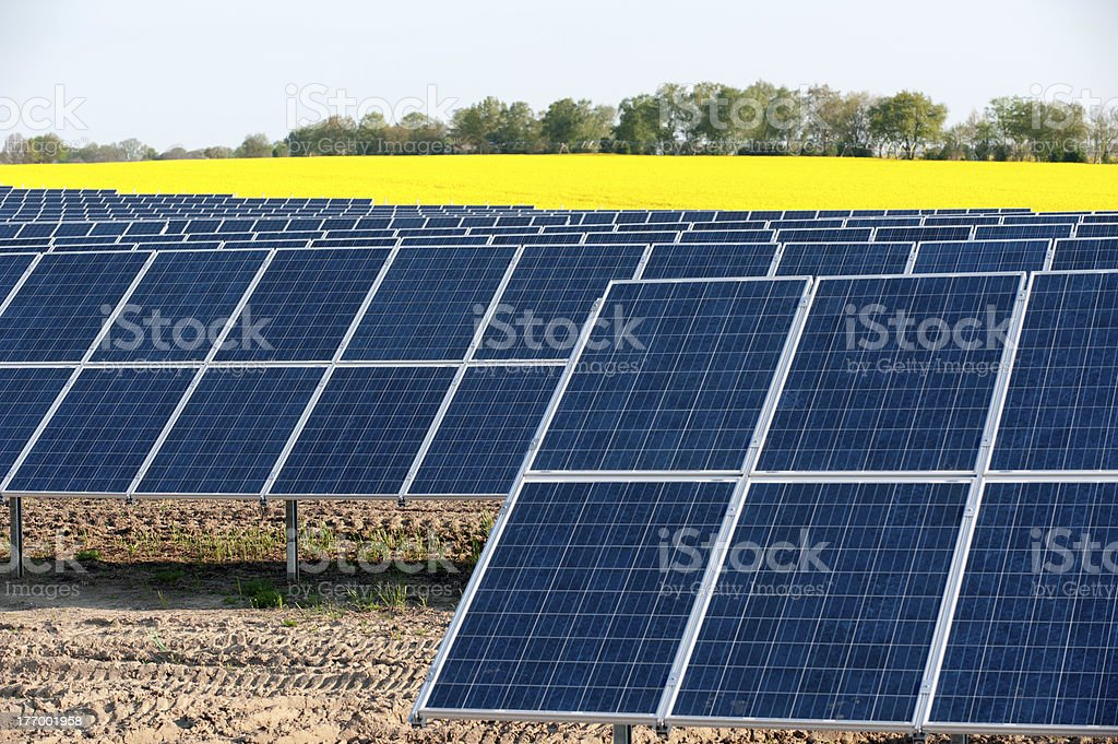 Solar panels in a canola field stock photo