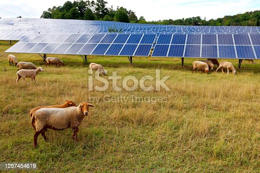 istock solar power station with sheep 1257454619
