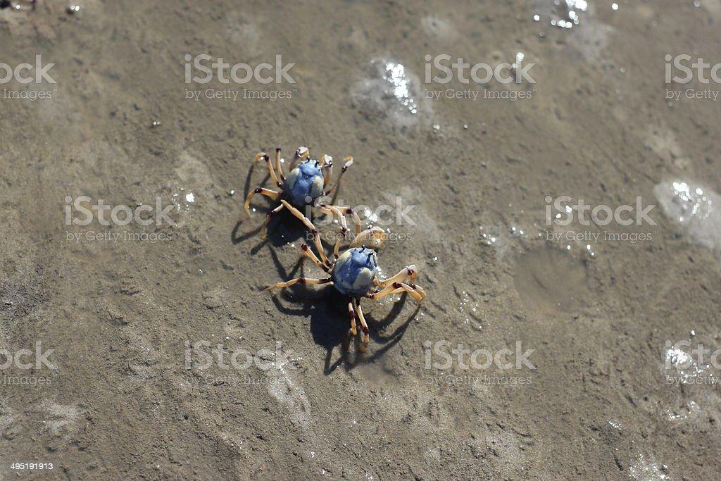Soldier Crabs stock photo
