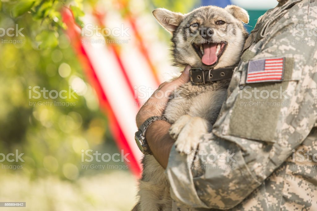 Soldier with his dog outdoors on a sunny day stock photo