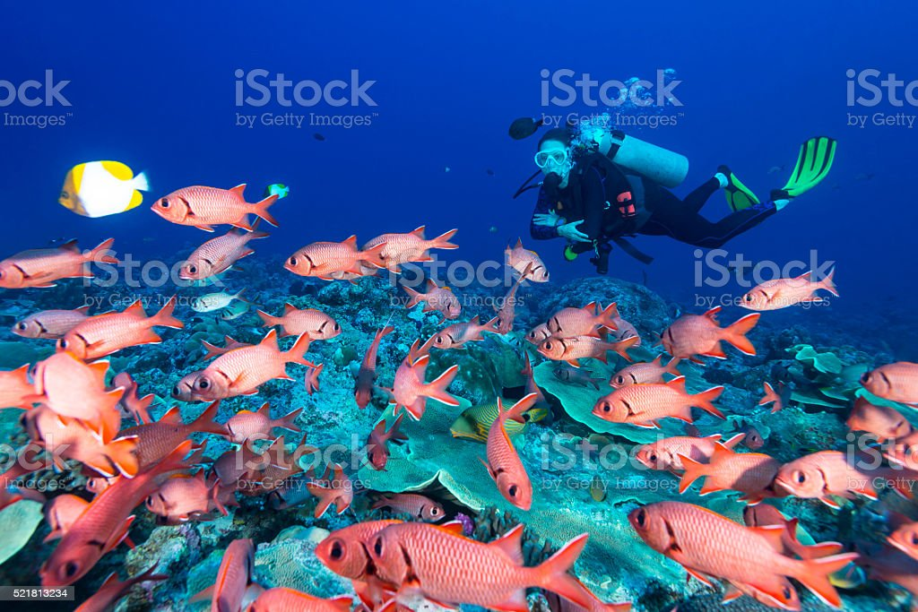 Soldierfish and diver - Palau stock photo