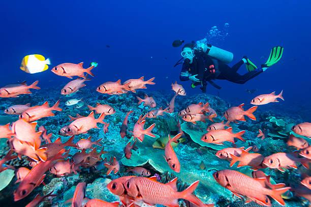 Poisson-soldat et plongeur-Palaos - Photo