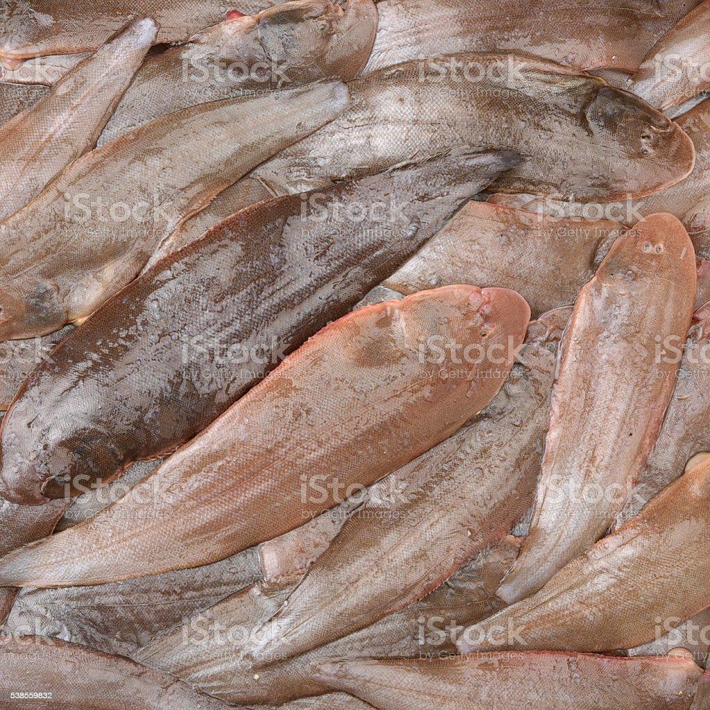 Sole fish stock photo