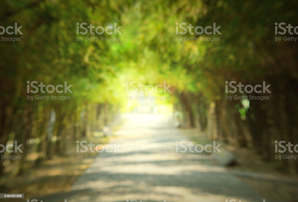 Solf and blure,dark Path Inside Tree stock photo
