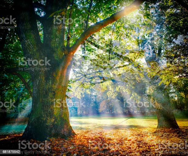 Photo of Solitary ancient oak with awesome sunbeams