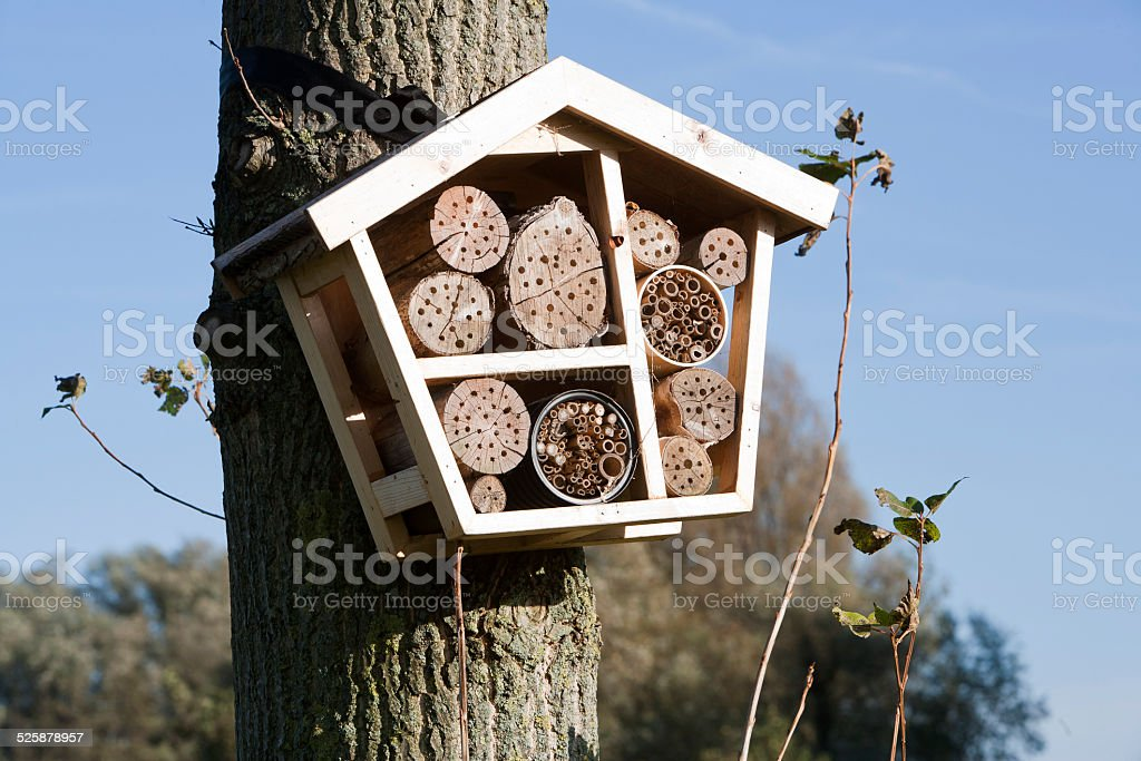 Solitary bee hotel foto