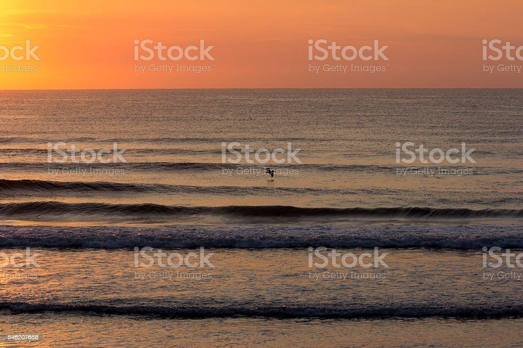 Solitary Bird over Ocean stock photo