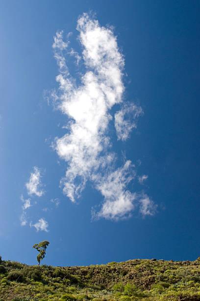 Solitary Eukalyptus-Baum gegen einen blauen Himmel 1 – Foto