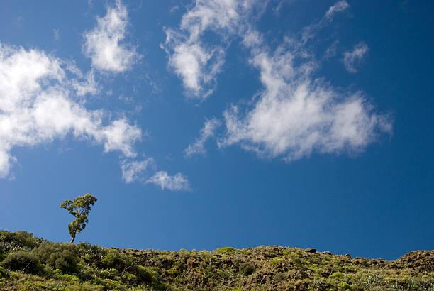 Solitary Eukalyptus-Baum gegen einen blauen Himmel 2 – Foto