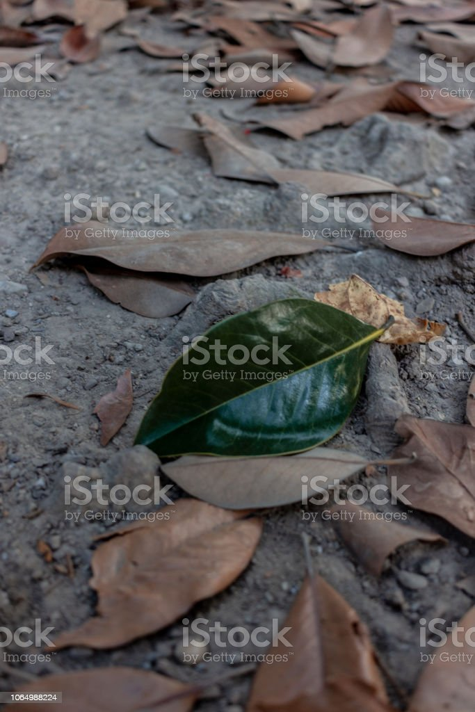 Solitary Green Leaf - foto stock