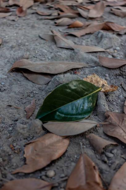 solitary green leaf - monica pirozzi foto e immagini stock