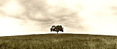 tree in the meadow (199) panorama format