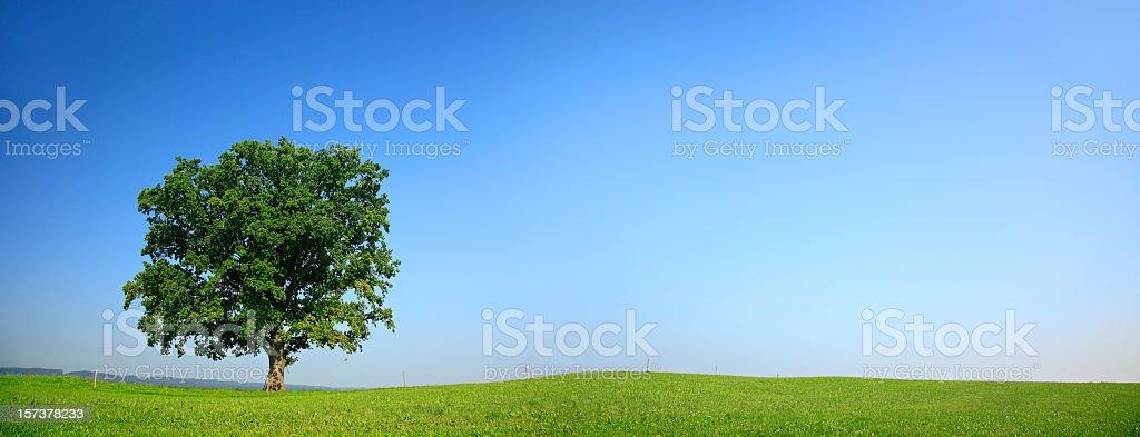 Einsamen Eiche Panorama – Foto