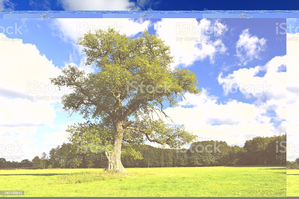 Solitary Oak Tree on Meadow under Cloudy Sky royalty-free stock photo