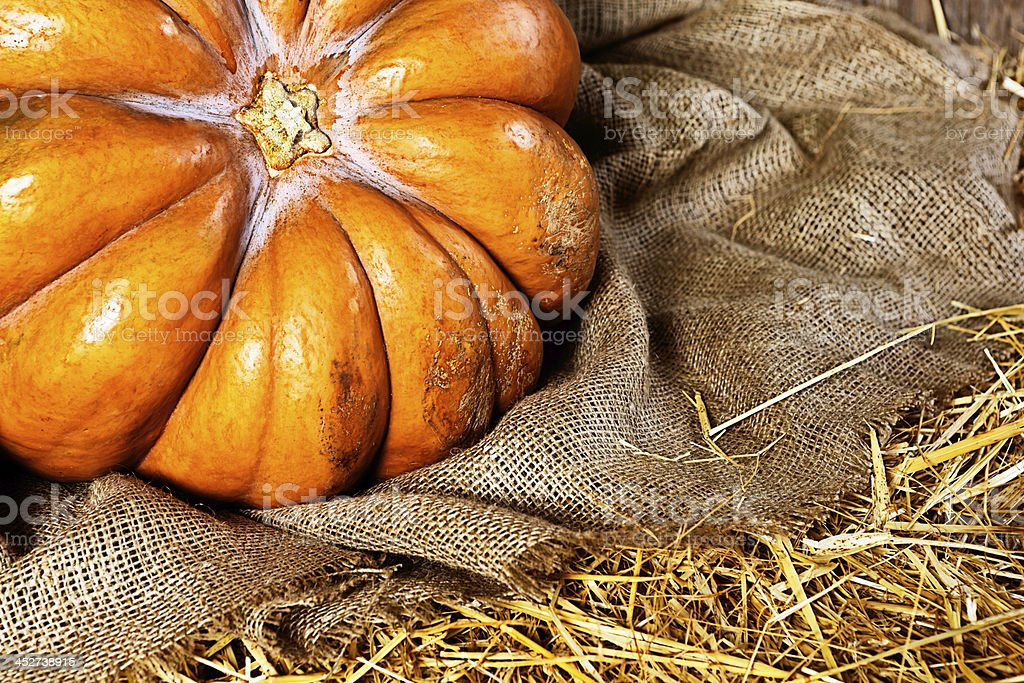 Solitary pumpkin on hessian and straw royalty-free stock photo