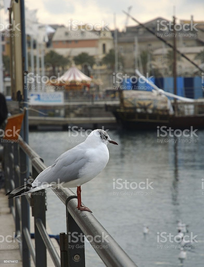 Solitary seagull royalty-free stock photo