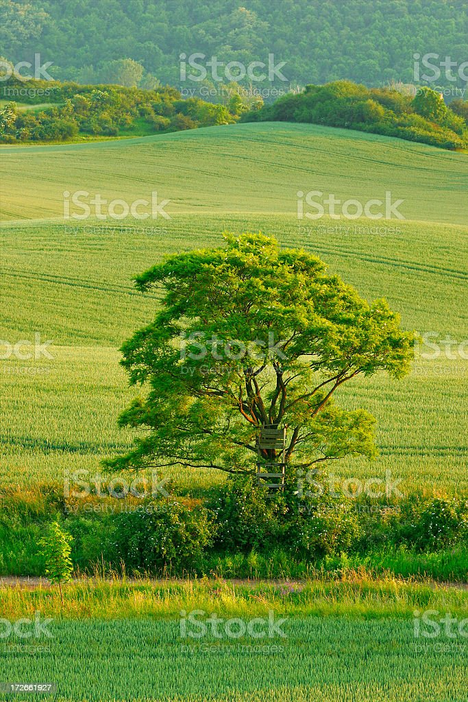 Solitary Tree against Green Fields stock photo