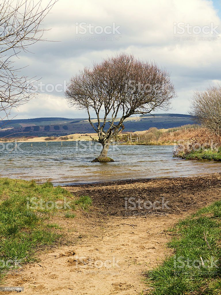 Solitary tree growing in lake shallows royalty-free stock photo