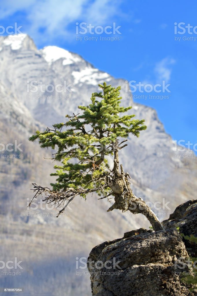 Solitary tree grows from jutting rock stock photo