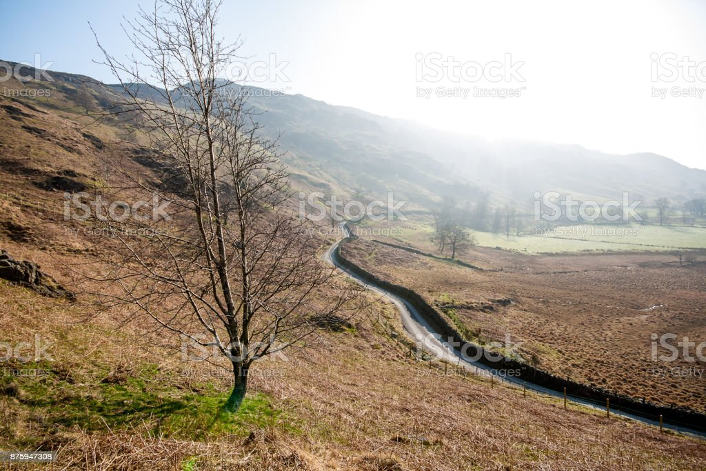 Solitary tree in English Lake District landscape with narrow country road stock photo