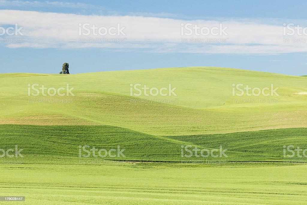 Solitary Tree in Farmland royalty-free stock photo