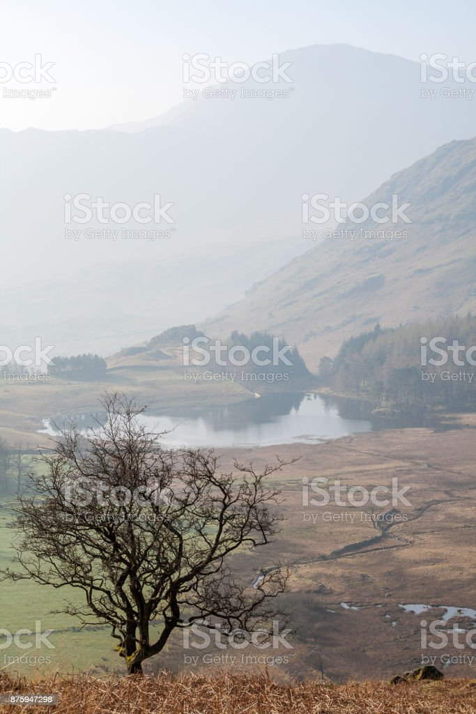 Solitary tree in Lake District with Blea Tarn in background mist stock photo