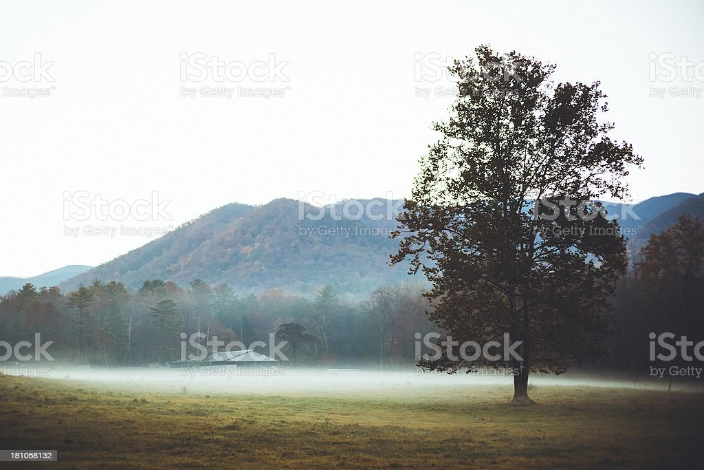 Solitary Tree in the Field, Great Smoky Mountains, Cades Cove stock photo