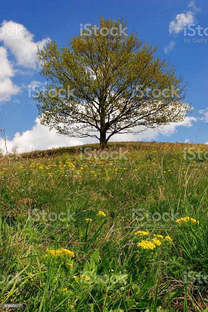 Solitary Tree on Top of a Hill royalty-free stock photo