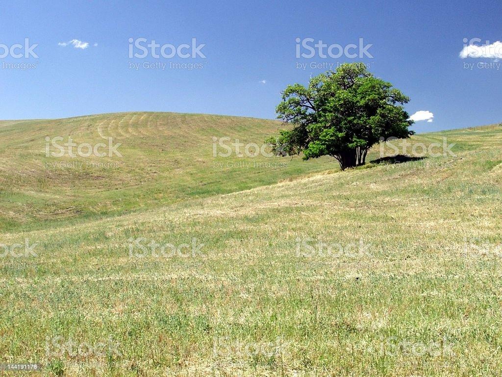 Solitary Tree royalty-free stock photo