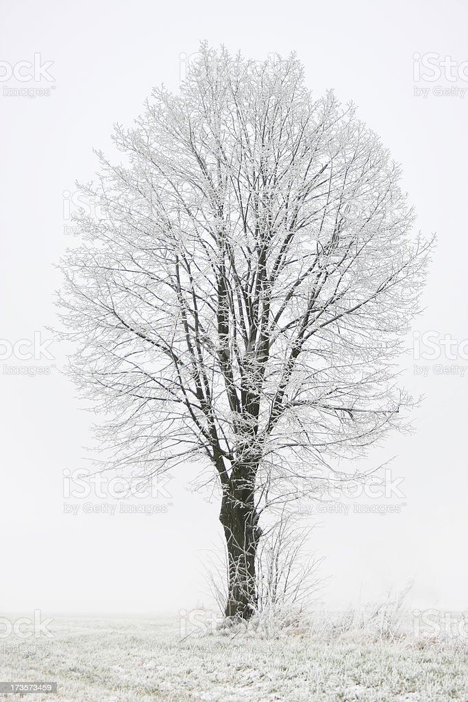 Solitary tree royalty-free stock photo