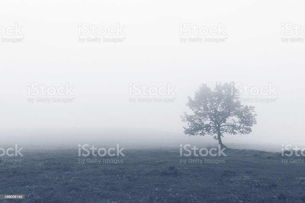 solitary tree with fog stock photo