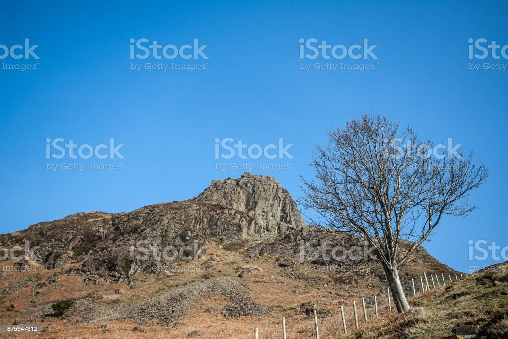 Solitary Tree with Lake District rocky outcrop and fence stock photo