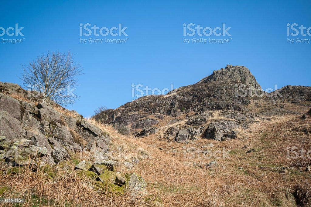 Solitary Tree with Lake District rocky outcrop stock photo