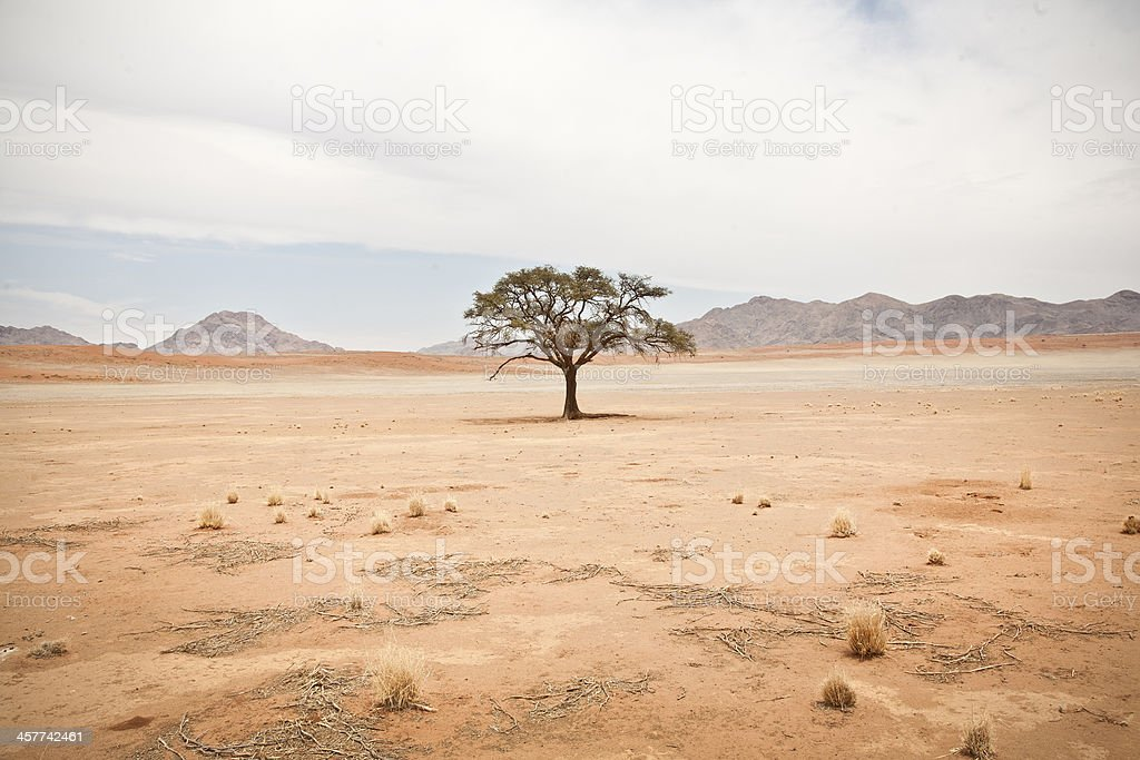 Solitary Tree with Leaves stock photo
