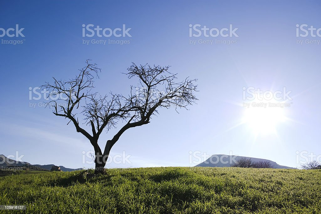 Solitary tree without leaves isolated in backlight royalty-free stock photo