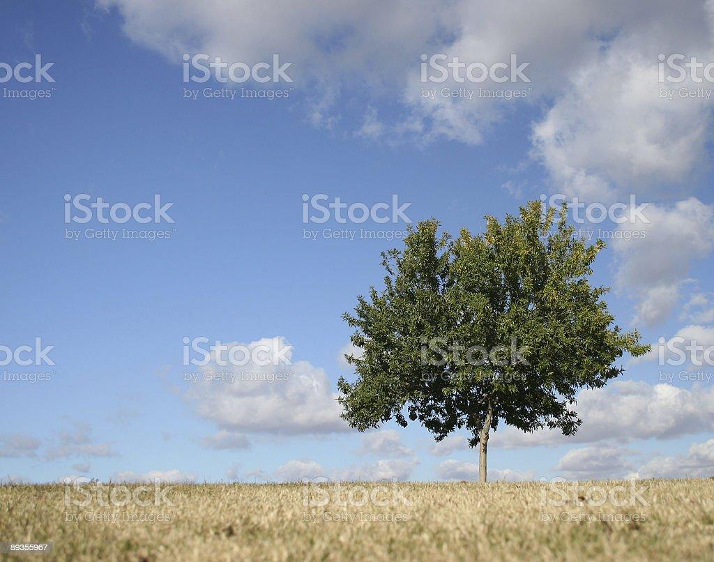 Pojedyncza Drzewo-poziomej zbiór zdjęć royalty-free