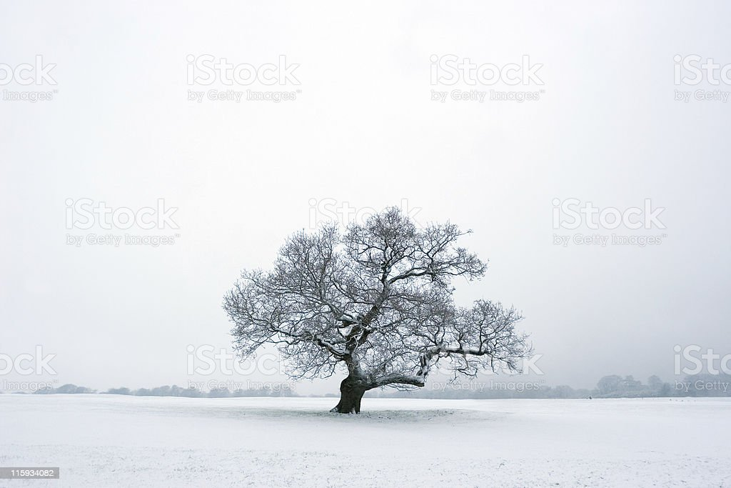 Solitary Winter Tree In Snow royalty-free stock photo