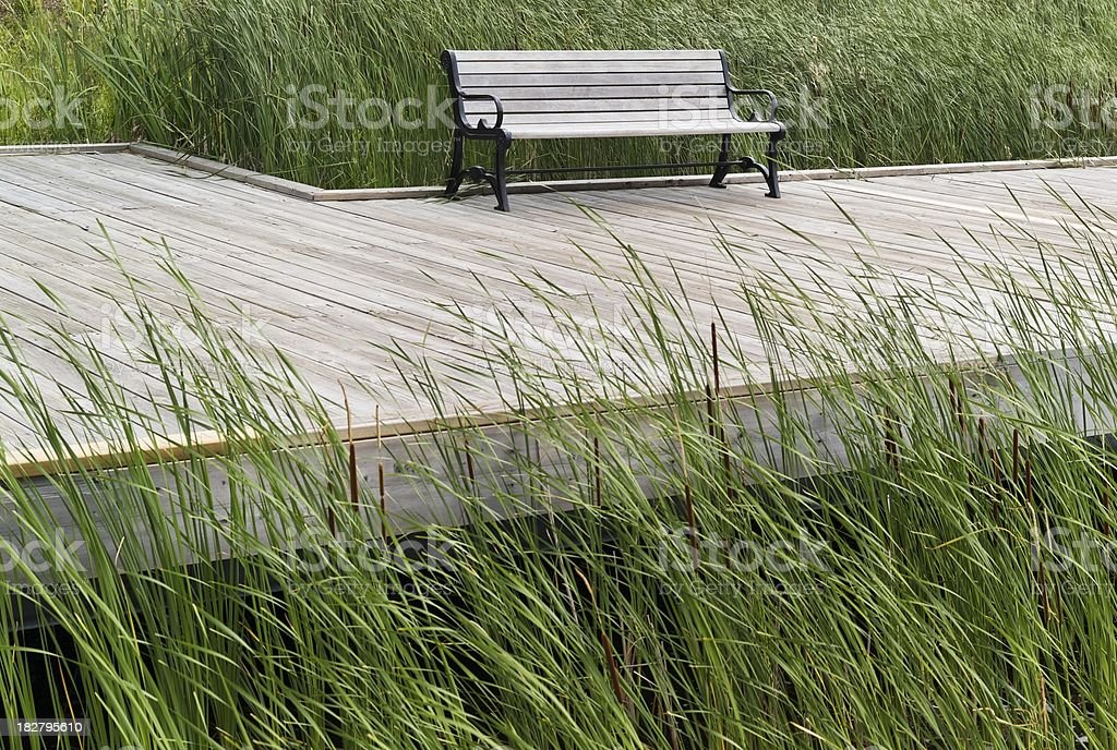 Solitude bench by the marsh stock photo