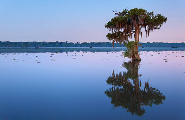 solitude - cypress tree stock photos and pictures