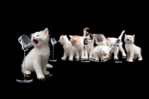singer cats and her choir
